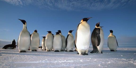 penguins leadership 3