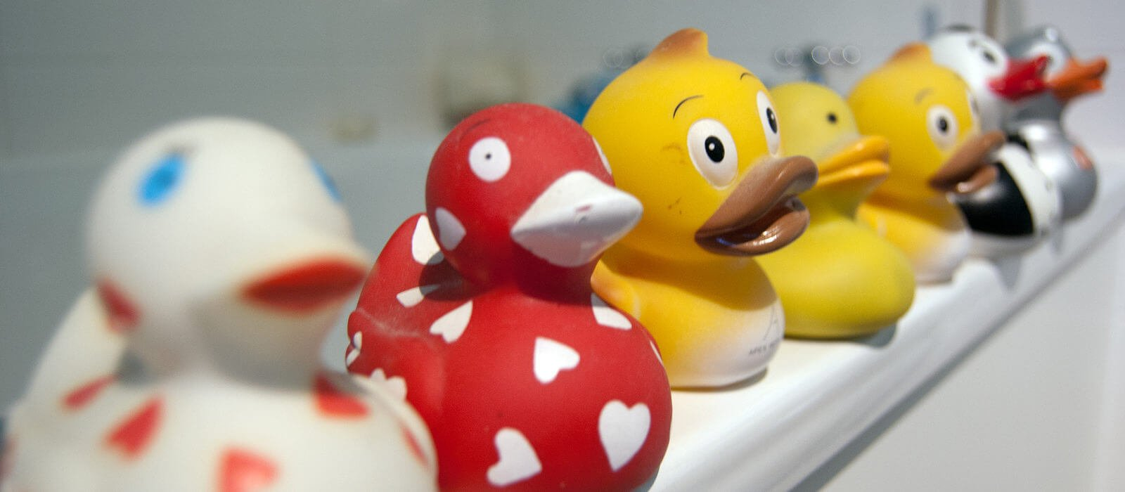 Colorful colorful duck toys standing in a row